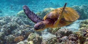 Hint Okyanusu'nda yeni türler bulundu