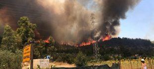 İzmir'de makilik alanda başlayan yangın ormanlık alana yayıldı